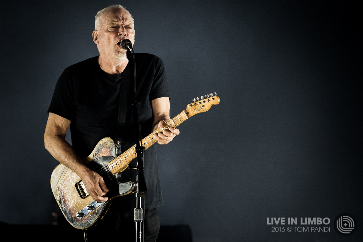 Wall Paper Mural David Gilmour At The Air Canada Centre Concert Reviews